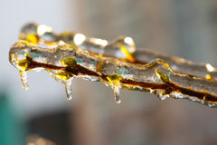 Branches covered with ice Stock Images
