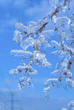 Branches covered with ice Royalty Free Stock Images