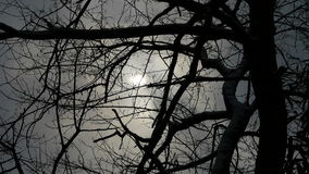 Branches covered sky and cloud.Trunk,forest,woods,Desolate. stock video footage