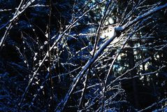 Branches covered in snow with sun coming down Stock Images