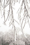 Branches covered snow Royalty Free Stock Photography