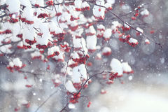 Branches covered. With snow winter snowfall background Royalty Free Stock Photos
