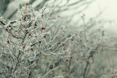 Branches covered. With snow winter snowfall background Stock Photos