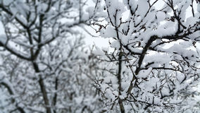 Branches covered with snow Stock Photography