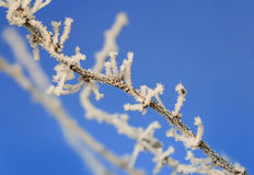 Branches are covered with white fluffy snow flakes in winter Park Stock Image