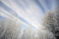 Branches Covered With Frost Against Picturesque Backdrop Of The Sky. Royalty Free Stock Photos