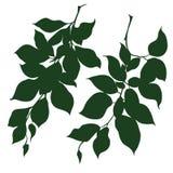 Branches décoratives Image libre de droits