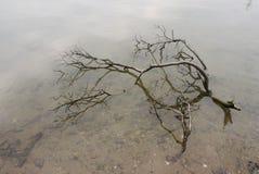 Branches défraîchies dans l'eau Images libres de droits