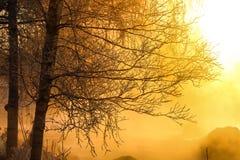 Branches d'arbre à la belle lumière du soleil Photos libres de droits