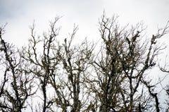 Branches d'arbre aléatoires Photographie stock libre de droits