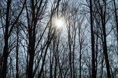 Branches d'arbre aléatoires Images stock