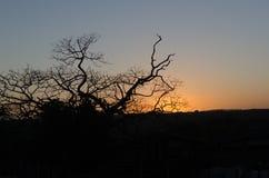 branches d'arbre au crépuscule du jour Photo libre de droits