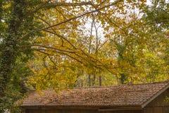 Branches d'arbre au-dessus du toit carrelé d'une maison de campagne répandue avec les feuilles d'automne sèches image libre de droits