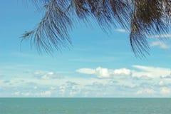 Branches d'arbre au-dessus d'océan avec le ciel bleu Photos stock