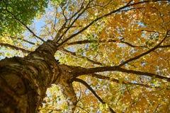 Branches d'arbre d'automne Image stock