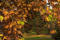Branches d'arbre avec des feuilles de colorfull image stock