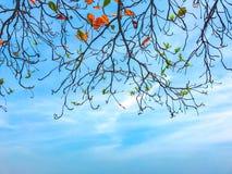Branches d'arbre avec les feuilles colorées Image stock