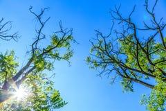 Branches d'arbre avec les feuilles vertes images stock