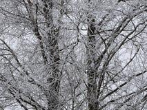 Branches d'arbre blanches dans le gel en hiver Image libre de droits