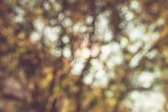 Branches d'arbre colorées dans la forêt ensoleillée, fond brouillé naturel d'automne Photos stock