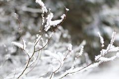 Branches d'arbre couvertes dans la neige de fond brouillé Photo libre de droits