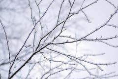 Branches d'arbre couvertes dans la neige de fond brouillé Photo stock