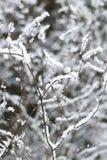 Branches d'arbre couvertes dans la neige de fond brouillé Photos stock