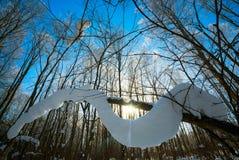 Branches d'arbre couvertes de couche épaisse de neige par temps ensoleillé dans la forêt d'hiver Image libre de droits