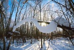Branches d'arbre couvertes de couche épaisse de neige par temps ensoleillé dans la forêt d'hiver Photo stock