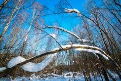 Branches d'arbre couvertes de couche épaisse de neige par temps ensoleillé dans la forêt d'hiver Image stock
