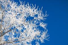 Branches d'arbre couvertes de neige sur le ciel bleu de fond Images stock
