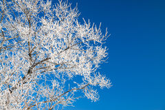 Branches d'arbre couvertes de neige sur le ciel bleu de fond Photos libres de droits