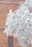 Branches d'arbre couvertes par la chute de neige importante Images stock