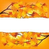 Branches d'arbre d'automne Photo stock