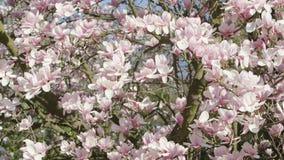 Branches d'arbre dans la fleur Photographie stock