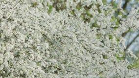 Branches d'arbre dans la fleur Image libre de droits