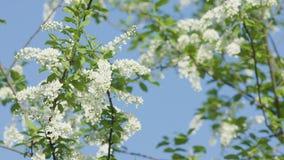 Branches d'arbre dans la fleur Images stock