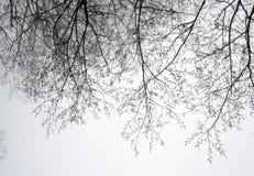 Branches d'arbre dans le brouillard Photographie stock