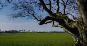 Branches d'arbre dans le domaine d'herbe, Irlande Photos stock