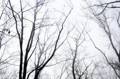 Branches d'arbre dans le matin brumeux photos stock