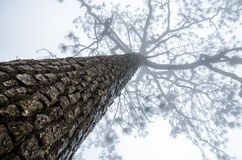 Branches d'arbre dans les brumes Images libres de droits