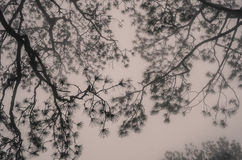 Branches d'arbre dans les brumes Photo stock