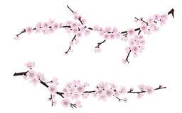 Branches d'arbre de floraison de ressort avec les fleurs roses Photo stock