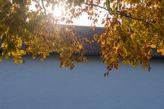 Branches d'arbre de hêtre Images libres de droits
