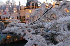 Branches d'arbre de Noël avec les quirlandes électriques par crépuscule Photographie stock libre de droits