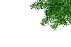 Branches d'arbre de Noël d'isolement au-dessus du blanc Photographie stock