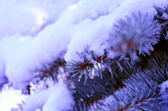 Branches d'arbre de Noël dans la neige Photo stock