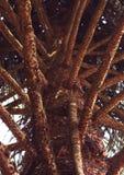 Branches d'arbre de puzzles de singe Images stock
