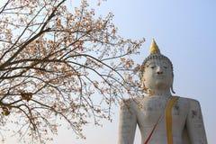 Branches d'arbre de ressort avec la lumière du soleil et le Bouddha, fond Photo stock