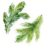 Branches d'arbre de sapin-aiguille de Noël d'aquarelle Image libre de droits